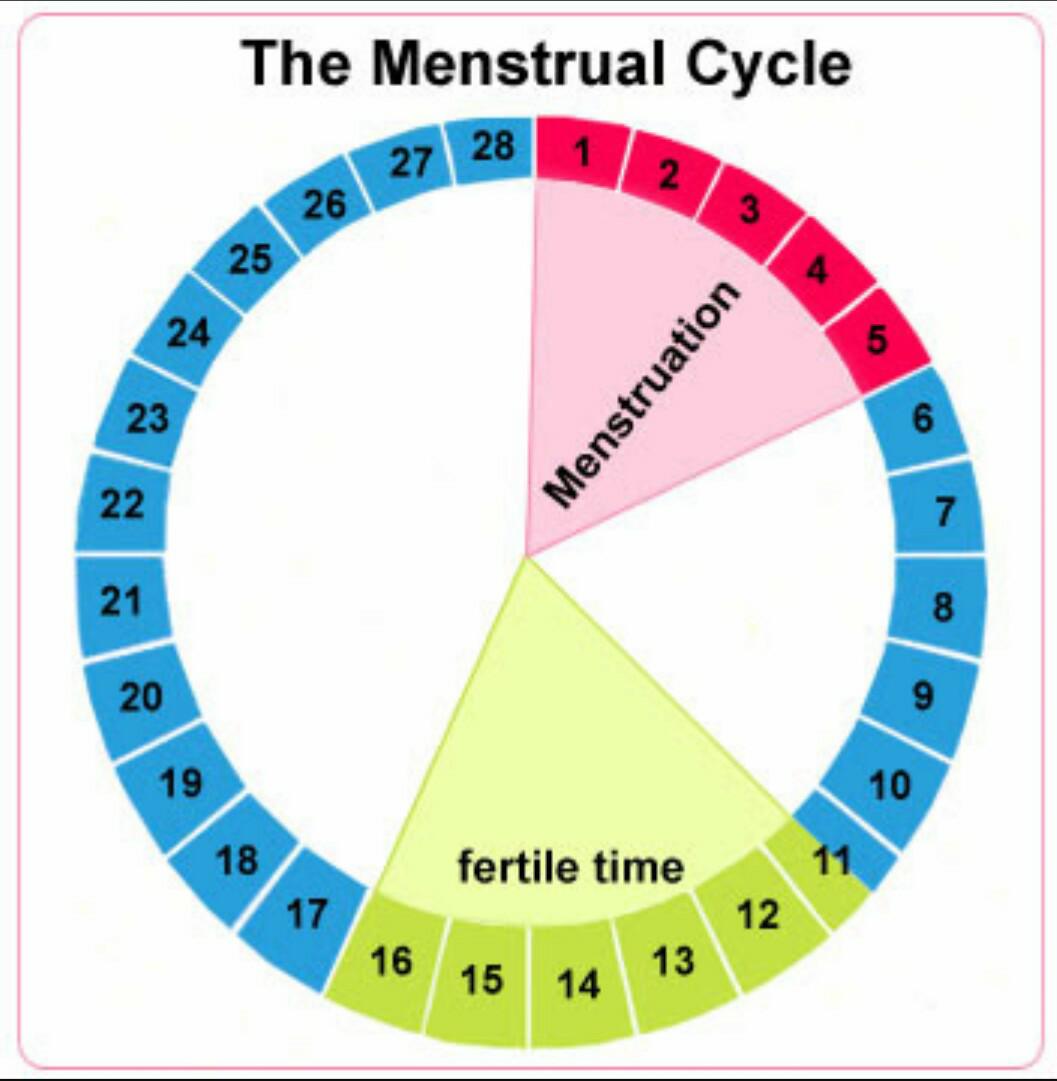Рассчитать дни безопасного секса