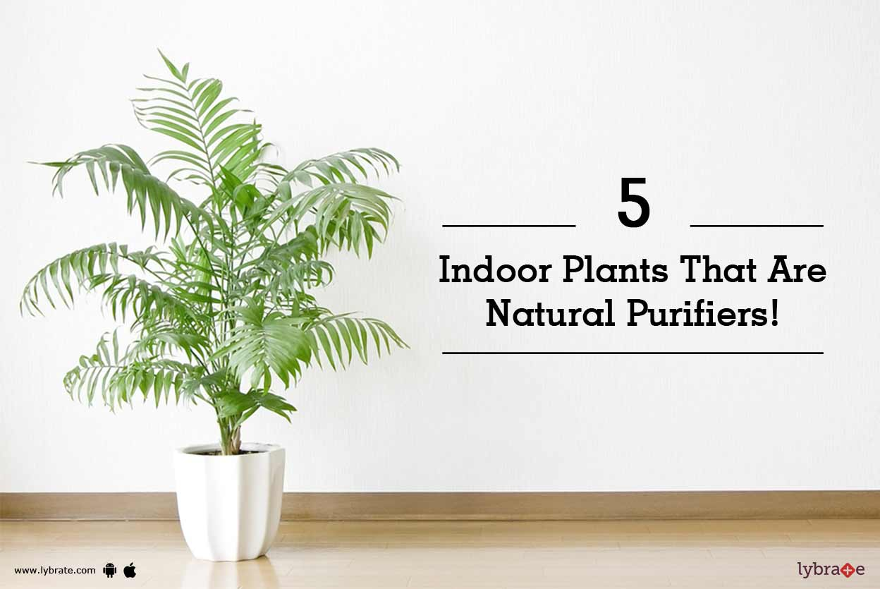 5 Indoor Plants That Are Natural Purifiers!