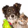 Pets Clinic Ahmedabad