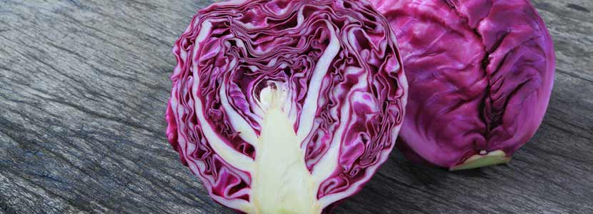Image result for Red cabbage: Nutrients of therapeutic value