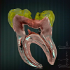 SHIFA ORAL CARE DENTAL CLINIC. Image 1