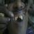 vidhya's eversmile dental clinic Image 5