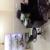 Avinashi Homeopathic Clinic - Shivnagar,  | Lybrate.com