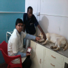 Pet Friends ,Dog Clinic & Pet Shop Image 1