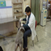 Pet Friends ,Dog Clinic & Pet Shop Image 3